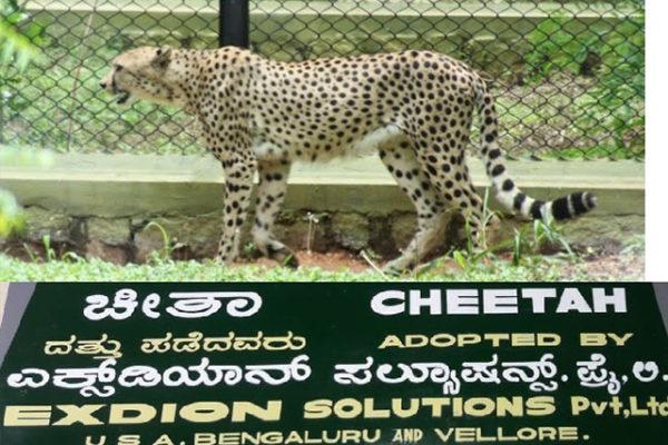 exdion-cheetah